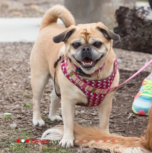 Puggle Tails Of The Monon